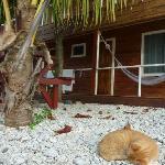 The Resident Cat