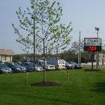 Tree planted in memory of Dino Karayiannis