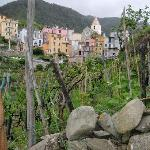 Little Corniglia and its vineyards