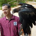 Birds of Prey at Healesville Sanctuary