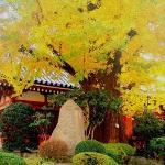 Asakusa Gardens...Tokyo, Japan