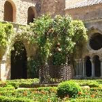 Abbaye de Fontfroide - garden