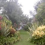 Ballinderry garden