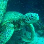 One of the local reef residents
