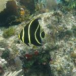 An underwater wonderland
