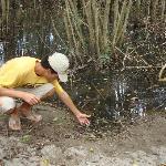 Mangrove hike