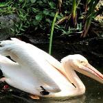Bilde fra Jurong Fuglepark