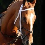 O.K.  you can watch my horse on TV, Pioneer of the Nile in the Preakness today starting at 6pm