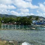 Dolphin Discovery Tortola Foto