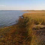 Relaxing on the shore on east shore of Virginia above Norfolk. Beautiful day!!