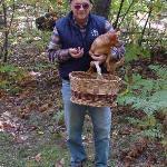 la raccolta dei marroni nel bosco