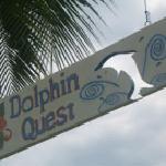 Photo de Dolphin Quest
