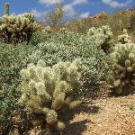 Arizona desert plants