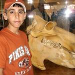 Xavier looking at a hippo skull