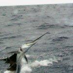Foto de Captain Ricks Sport Fishing