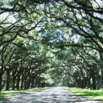 Wormsloe Historic Site Photo