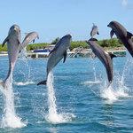 Dolphin Discovery Isla Mujeres