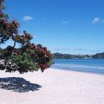 Onetangi Beach - Waiheke Island