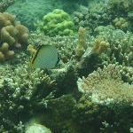View underwater