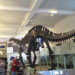 Bilde fra American Museum of Natural History