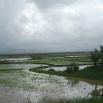 Distant rain, Nagothane