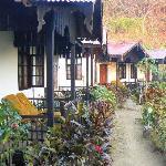 Nice bungalows with lush vegetation around