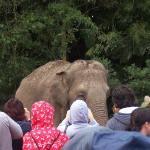 Bilde fra Australia Zoo