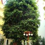 huge tree inside the hotel