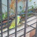 Luisita, the resident parrot.