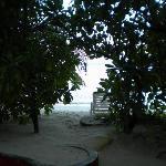 Vista camera