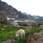 The view and wildlife on the way to Sperry Glacier