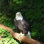 There are so many Bald Eagles.  Beautiful creatures.