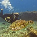 Diving with a sea turtle.