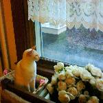 One of her cats by the window