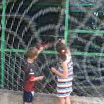 Feeding the macaws