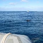 There were about 35-40 Spinner dolphins that played around the boat