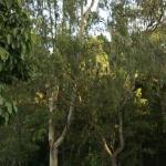 Gum trees, we could be at home!!