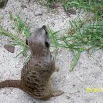 Bilde fra Ardastra Gardens, Zoo and Conservation Center