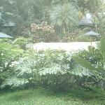 un jardin et une piscine divin!!!!