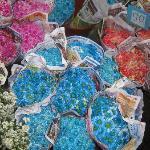 Flower/Night Market