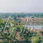 view from the Firoz Minar