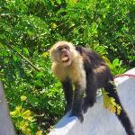 We loved the monkeys