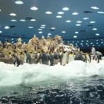 Planet Penguin including snow !