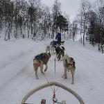 Lyngsfjord Adventure Dog Sledding