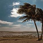 Bahia Palm