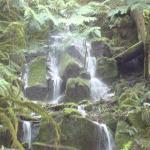 Waterfall, Mt. Rainier, Beautiful.