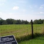 Looking north-west from Longstreet's line.  The field behind the fence is private property, thou