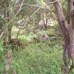 These picture is west of the old farm house, in the newly acquired land.  During the Civil War,