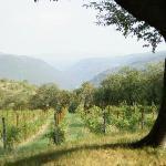 More Vineyards at Delo