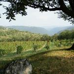 Agriturismo Delo's grounds